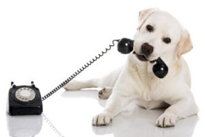 dog-telephone-grooming